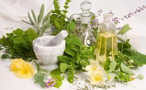 Plante sedative